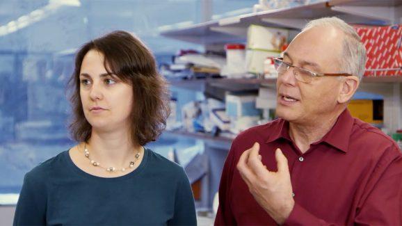 Illumina – Adventures in Genomics: Microbial Genomics of Polluted Environments